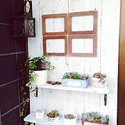 Entrance/シュガーバイン/多肉植物/端材/ガーデン雑貨/ガーデニング…などのインテリア実例