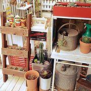 ガーデンジャンク/庭/多肉/サビサビ/サボテン/ビンテージ…などのインテリア実例