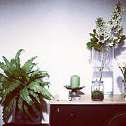 オオタニワタリ/テラリウム/古い家/Today's flowers/ディスプレイ…などのインテリア実例
