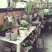 ベランダガーデニング/簡単リメイク/端材リメイク/多肉植物/観葉植物/NO GREEN NO LIFE…などのインテリア実例