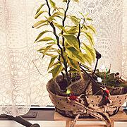 多肉植物/観葉植物/Lounge…などのインテリア実例