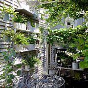 DIY/ホワイト&グレー/植物のある暮らし/観葉植物/多肉植物/雑貨…などのインテリア実例