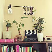 観葉植物/フェイクグリーン/100均/賃貸でも楽しく♪/セリア/2人暮らし…などのインテリア実例