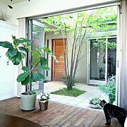 papa maman house/グリーン/中庭/ゴムの木/ねこ部/猫…などのインテリア実例
