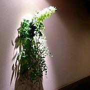 フラワーアレンジ/植物/My 店/On Walls…などのインテリア実例