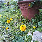 黄色い花のインテリア実例写真