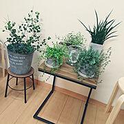 観葉植物/セメント鉢/二世帯住宅/二世帯住宅の二階/植木鉢/My Desk…などのインテリア実例