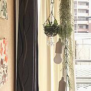 無印良品/カゴが好き♡/観葉植物/海外インテリアに憧れて/賃貸マンション/noce…などに関連する他の写真