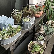 キッチン収納/スパイスラック/100均/フェイクグリーン/多肉植物/3Coins…などに関連する他の写真