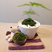 照明/多肉植物/植物/盆栽/My Desk…などのインテリア実例