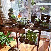 植物/アガベ/キセログラフィカ/GREENのある暮らし/関西好きやねん会/JUNK…などのインテリア実例