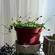 多肉植物初心者/カラーゼオライト/カラーサンド/テラリウム/多肉植物に関連する他の写真