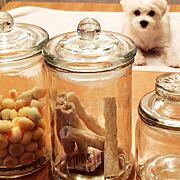 マルチーズ三太のおやつ♡/スタジオクリップの瓶/Kitchen…などのインテリア実例