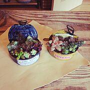 リメカン初挑戦/多肉植物/リメカン/My Desk…などのインテリア実例