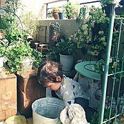 春の嵐の後のお母さんガーデン。/お母さんのベランダガーデニング/実家にて。…などのインテリア実例