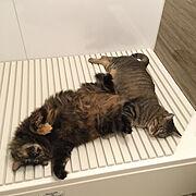 黄金の左手/おっぴろげー/ムーンちゃん/もなかちゃん/猫見風呂/猫との生活…などのインテリア実例