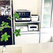 お店風/RC奈良支部/植物が好き/おきにいり空間/カフェ風/いつもいいね!ありがとうございます♪…などに関連する他の写真