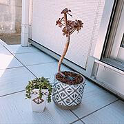 On Walls/グリーンネックレス/植木鉢とテラコッタの専門店 鉢人/多肉植物…などのインテリア実例
