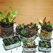 寄せ植え/多肉植物/植物/セリア/Entrance…などのインテリア実例