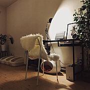 シンプルインテリア/グリーンのある暮らし/ねこと暮らす。/ねこ/間接照明/夜の部屋…などのインテリア実例