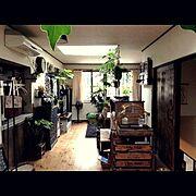 リメイク/handmade/壁紙屋本舗/DIY/プラントハンガー/観葉植物…などのインテリア実例