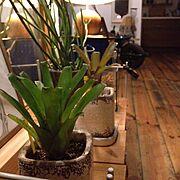 植物/NO GREEN NO LIFE…などのインテリア実例
