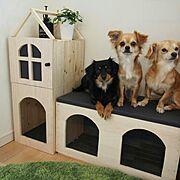 ペット/犬/なんちゃって屋根付/リンゴ箱リメイク/リンゴ箱/DIY…などのインテリア実例