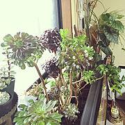 観葉植物/スタジオクリップ/雑貨/シャビーな雰囲気が好き/北欧/古道具…などに関連する他の写真