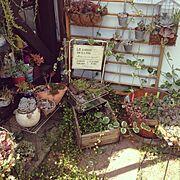 植物/多肉植物/Entrance…などのインテリア実例