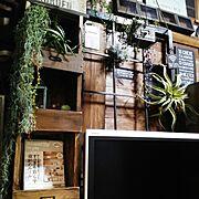 ブログよかったら見てみて下さい♩/IG⇨maca_home/いなざうるす屋さん/ティランジア…などに関連する他の写真