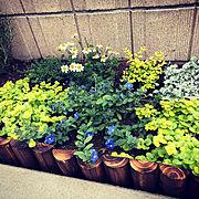 花のある暮らし/マイホーム/みどりのある暮らし/花壇/一軒家/ナチュラルガーデン…などのインテリア実例