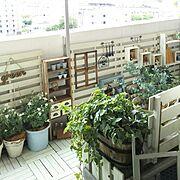 セリアフック/窓一枚犠牲/ディスプレイ棚DIY/娘部屋/DIY棚/ホームセンター通い…などに関連する他の写真