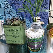 観葉植物/多肉植物/My Desk…などのインテリア実例
