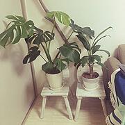 観葉植物/Lounge…などのインテリア実例