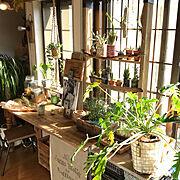 おうちカフェ/クッカバラ/urbanjungle/ボタニカル/カフェコーナー/植物のある暮らし…などのインテリア実例