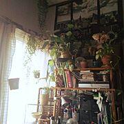 My Shelf…などのインテリア実例