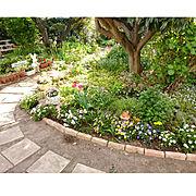 物語/アプローチ/アプローチDIY/チューリップ/庭/春の庭…などのインテリア実例