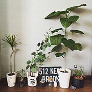 壁紙屋本舗/ポポラス/サボテン/植物/アデニウム/観葉植物…などのインテリア実例