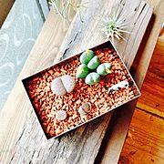 多肉植物/My Desk…などのインテリア実例