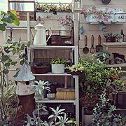 2016/07/29/ホワイトセージ/多肉植物/サビサビ/DIY/グリーンのある暮らし…などのインテリア実例