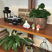 毎日素敵なお宅と巡り合う/犬と暮らす/無垢の木が好き/築20年/サンスベリア…などに関連する他の写真