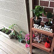 カフェ風/DIY/観葉植物/築30年/おもちゃ/雑貨…などのインテリア実例