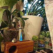 コの字TV台/観葉植物のある暮らし/リサラーソン/My Desk…などのインテリア実例