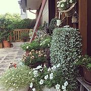My Shelf/今日のおすすめ30枚・感謝/鉢植え/いつもいいねありがとうございます♡/テラスガーデン…などのインテリア実例