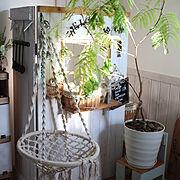 エバーフレッシュ/観葉植物のある暮らし/DIY/これさえあれば、わたしの部屋/My Shelf…などのインテリア実例