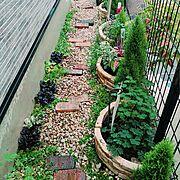 コニファー/コリウス/初雪カズラ/強い植物が好き/シンバラリア/アジュガ…などのインテリア実例