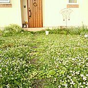 レトロ/一人暮らし/北欧/ガーデニング/フラワーアレンジメント/ナチュラル…などに関連する他の写真