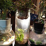 一人暮らし/観葉植物/IKEA/ダイソー/DIY/セリア…などのインテリア実例