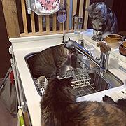猫と暮らす工夫/サビ柄/サビ猫/ムーンちゃん/もなかちゃん/立ち耳スコ…などのインテリア実例