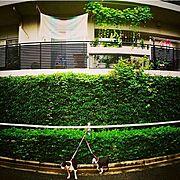 LOFT/リブラン/ガーデニング/観葉植物/グリーンカーテンのある暮らし/カーテンのある暮らし…などのインテリア実例
